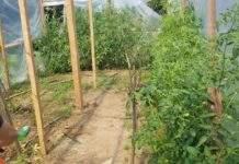 Разкриха огромна оранжерия за канабис