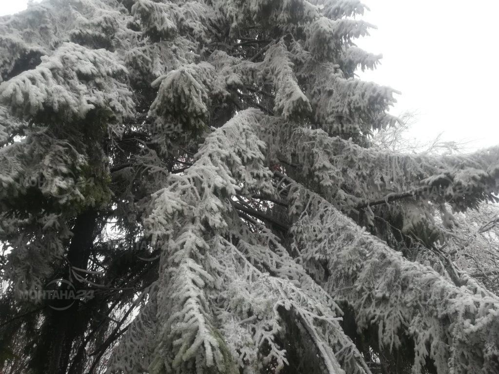 Първи сняг покри Петрохан