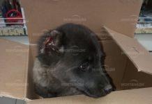 Изверг отряза ушите на куче в Берковица