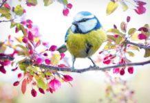 Пролетта ще се усмихва днес в региона