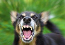 Община Лом ще плати обезщетение на жена нахапана от кучета
